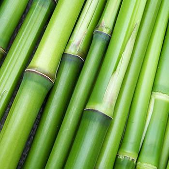 Bambus Fibre